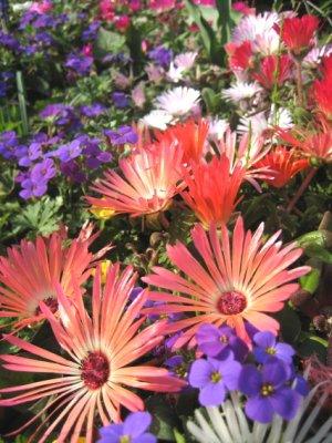 かわいいお花たち2