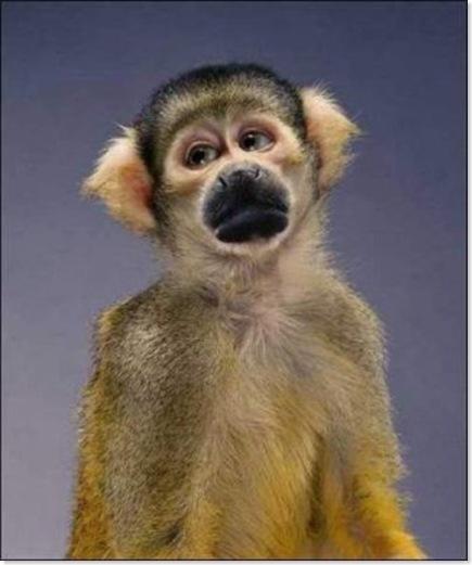Monos (3)
